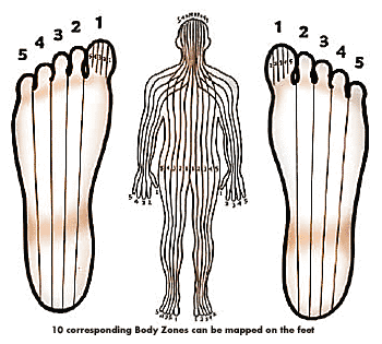 Reflexology Zones in Human Body