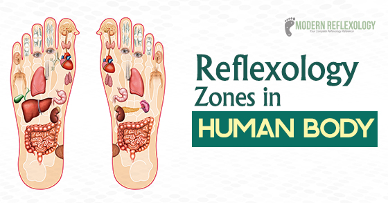 Reflexology Zones In Human Body Lateral And Longitudinal