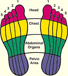 coloured reflexology zones