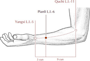 Large Intestine 6