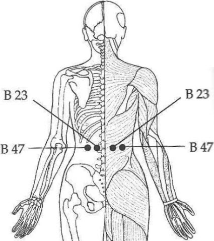 Bladder 23 and Bladder 47 acupressure points