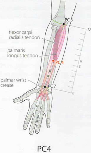10 healing pressure points to treat cardiovascular disorders this point can be stimulated on both arms by firmly pressing the points using the thumbs for 1 minute while breathing deeply ccuart Gallery