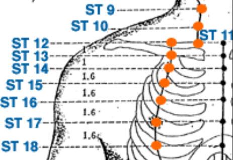 Stomach Meridian 15