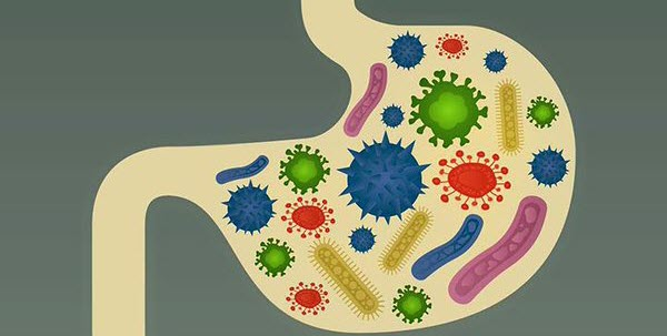 Feed your gut some good bacteria