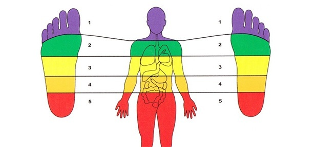 Zones of a Body