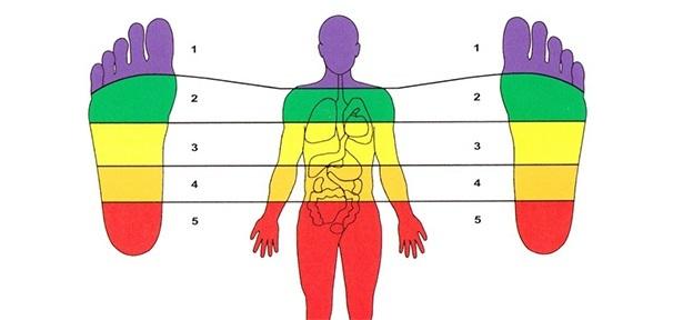 Zones of a Body