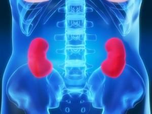 Kidney-water