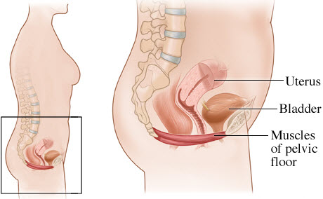 pelvic-floor-tension