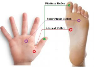 adrenal-reflexology-point