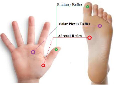 adrenal-reflexology-point