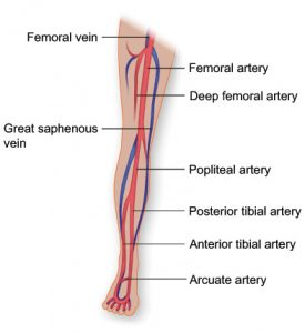 poor-circulation-in-the-legs