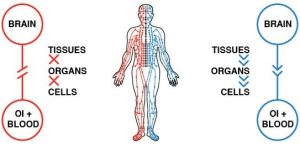 balancing-the-Qi-in-organs