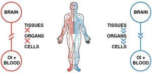 balancing-the-Qi-in-organs