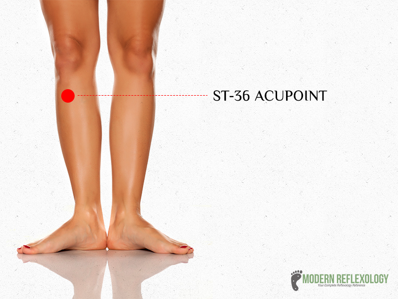 ST36 Acupressure point
